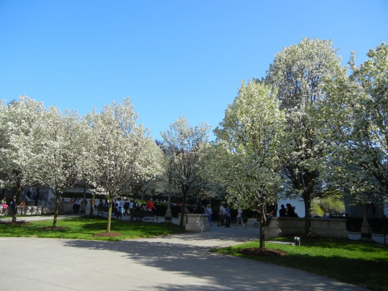 A monoculture of pear trees creates an impressive spring bloom, but no biodiversity.