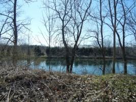 (3) A dense evergreen screen across the pond.