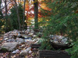 Start of stream amongst mature trees
