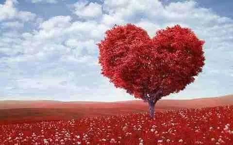 Similitudini d'amore