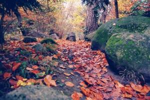 La scrittura, un sentiero impervio e faticoso