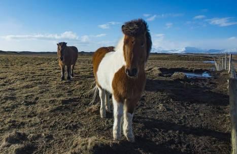 organizzare un viaggio in Islanda fai da te