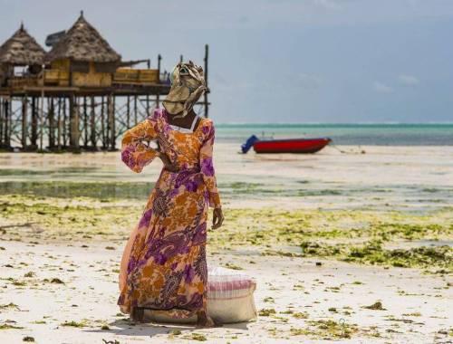Zanzibar marea ed alghe
