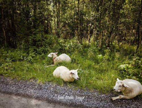 Guidare in Norvegia cose da sapere