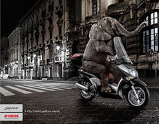 elephant_en_scooter.jpg
