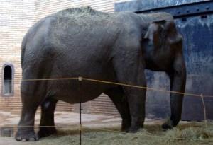 zoo sofia bulgarie