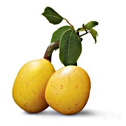 Amarula Fruit