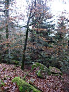 forêt de la vallée de la Bruche