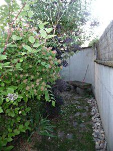 photinia, Kolkwitzia ,Cotinus , Buddleia