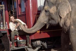 Tai - De l'eau pour les éléphants