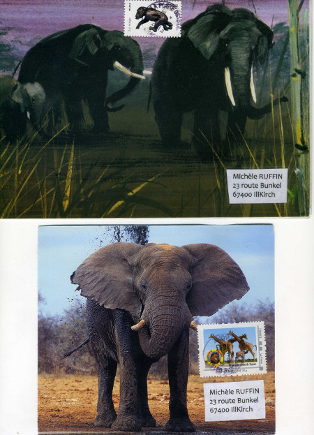 elephant 383