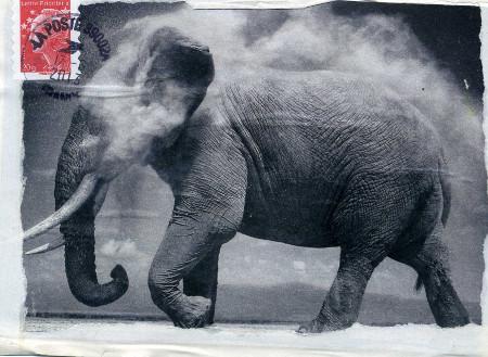 elephant401