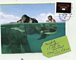 elephant_416