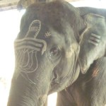 ArunachalashwaraElephant_at__Temple