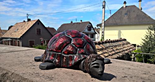 tortue alsacienne