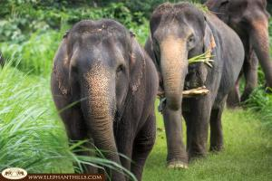 Elephants in their free roaming pens