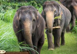 Elephants in their free roaming pens
