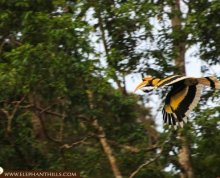 Wildlife and Nature in Khao Sok