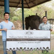 Elephant Hills Elephant Conservation Project - veterinary training