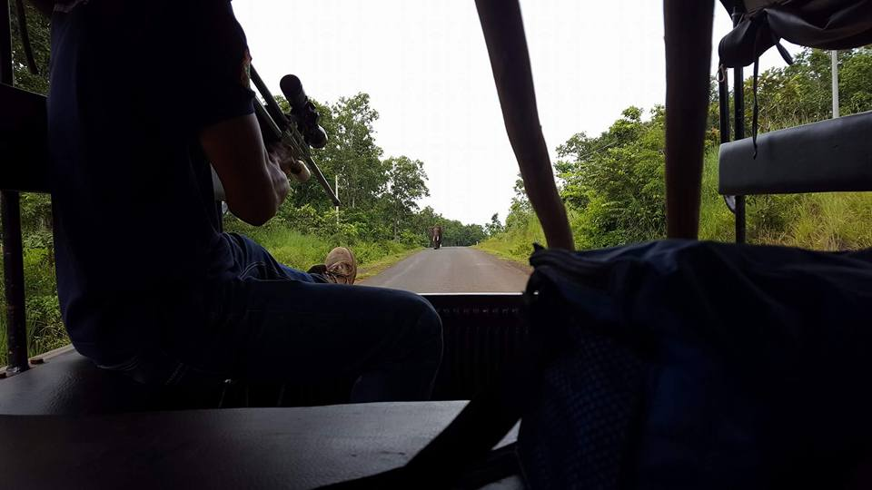 Vet darting Bak Mai - Elephant Valley Project Mondulkiri