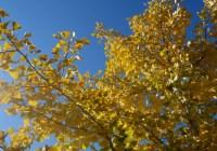 Sarà un autunno azzurro…