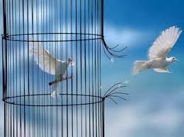 colombe gabbia