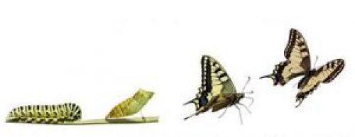 farfalla-e-bruco
