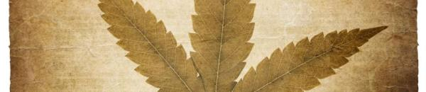cannabis-leaf-vintage-background-with-torn-edges-isolated-on-w