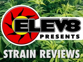 Cooking with Cannabis | Elev8 Presents