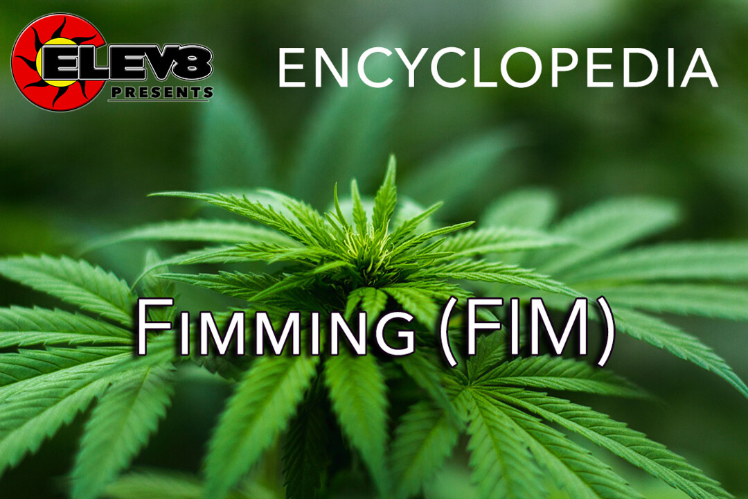 What does Fimming (FIM) mean? | Elev8 Presents