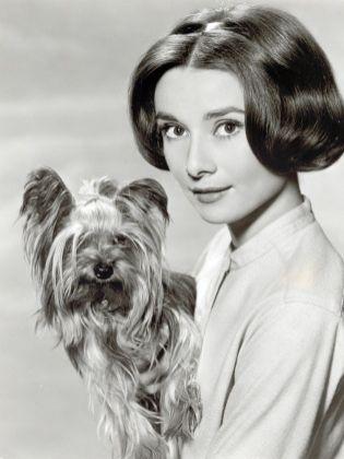 Audrey Hepburn et son Yorkshire
