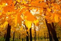 autum and fall photo