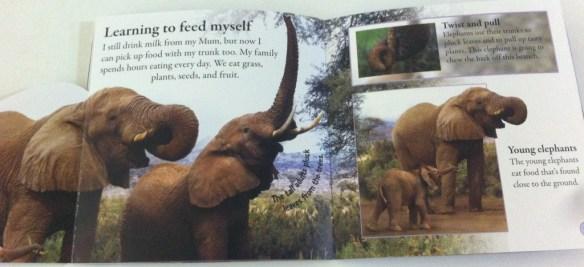 elephant 2