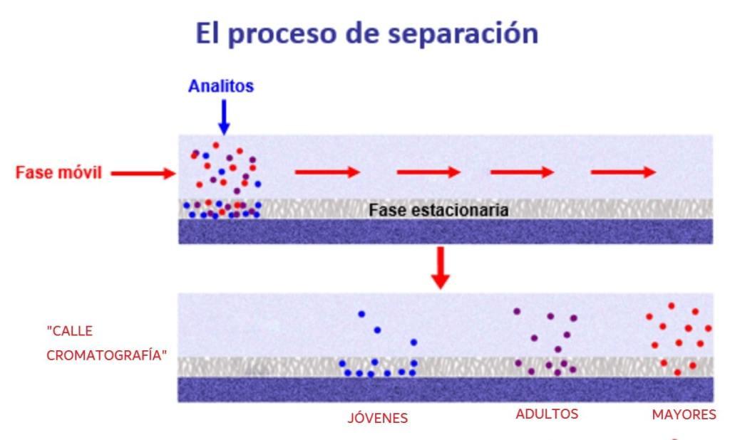 Proceso de separación de una cromatografía