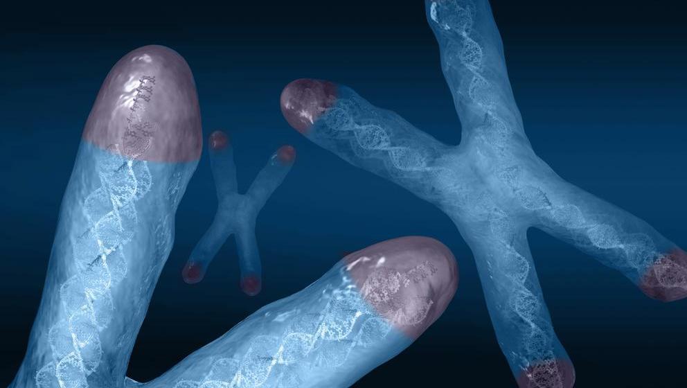 Telómeros – Todo lo que debes saber sobre el envejecimiento