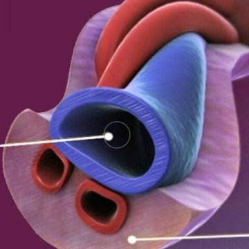 El cordón umbilical, el origen y el futuro