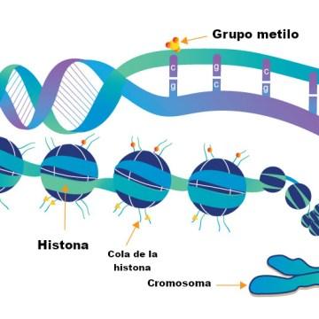 ¿Qué es la epigenética?