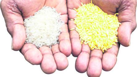 arroz normal con el arroz dorado