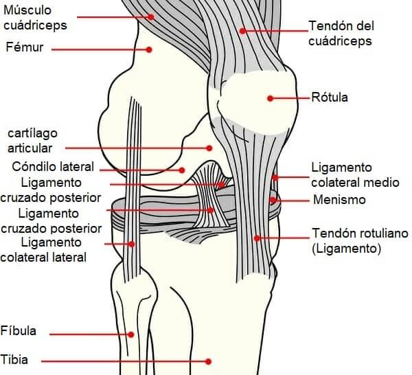 Diagrama de rodilla