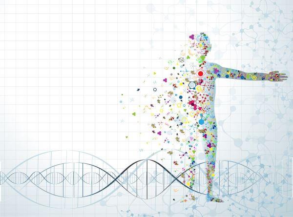 mapa corporal de tipos de células en el cuerpo humano