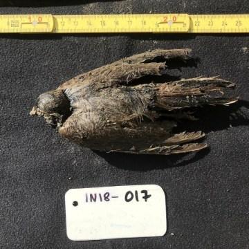 El curioso caso del pájaro de 46.000 años
