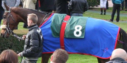 chemise bleu roi cheval
