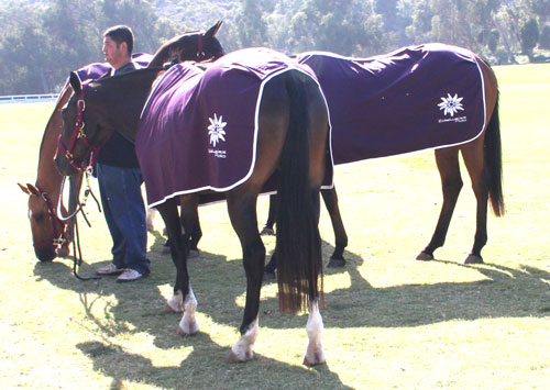 chemise coton cheval