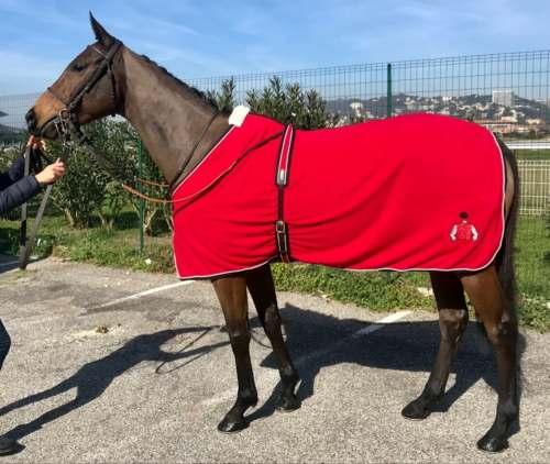chemise polaire de présentation cheval