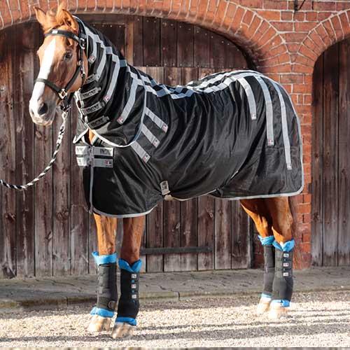 Soins et thérapies pour chevaux
