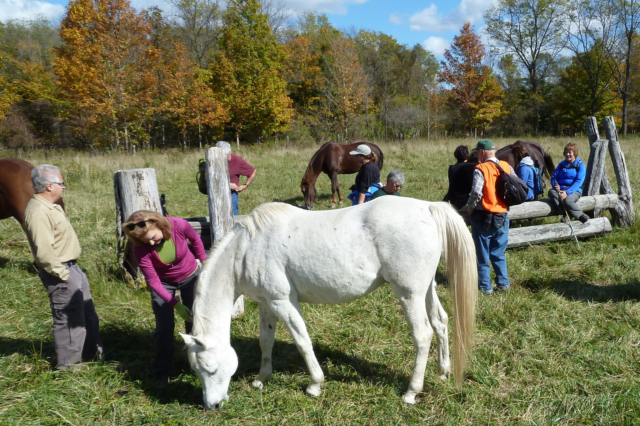 Horses_40806