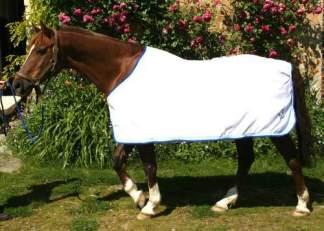Chemise cheval en éponge