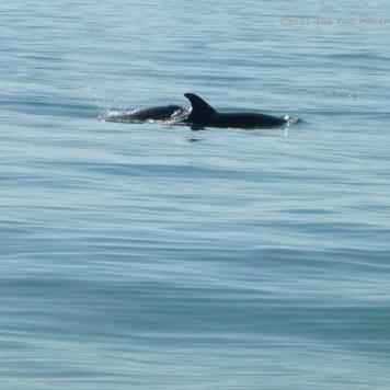 Pesca de caballas con delfines en Doñana _ Guadalquivir (2)