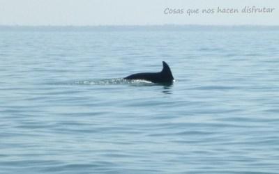 Pescando caballas entre delfines