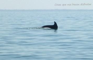 Pesca de caballas con delfines en Doñana _ Guadalquivir (4)